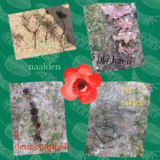 Op pad met Docus Das & lesbrief Collages maken